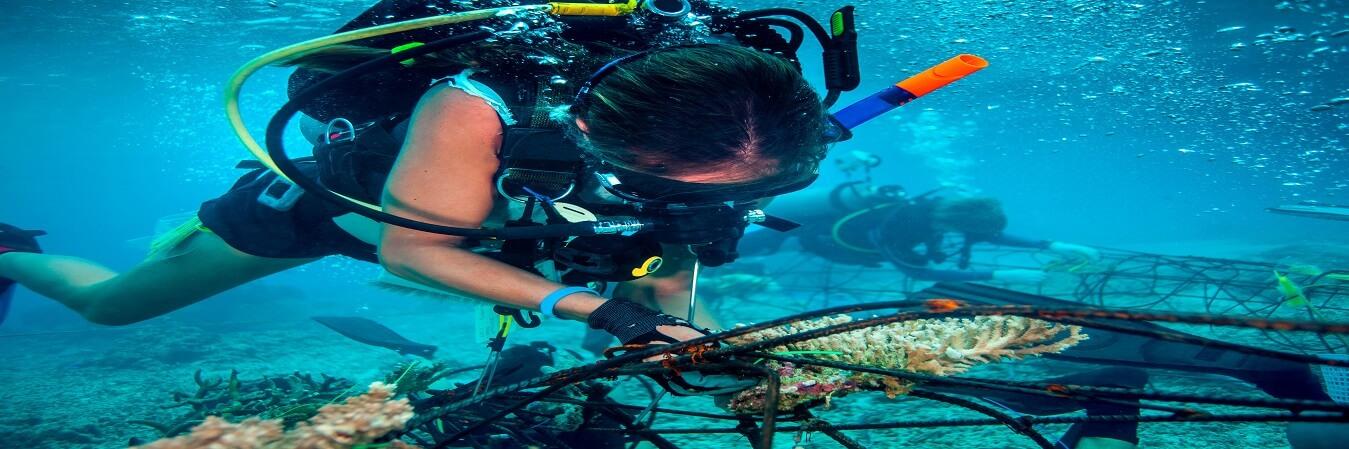 Tioman diving-diving package